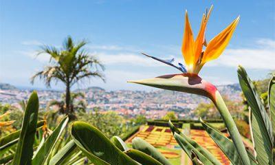 Stimme Leserreisen - Blumeninsel Madeira
